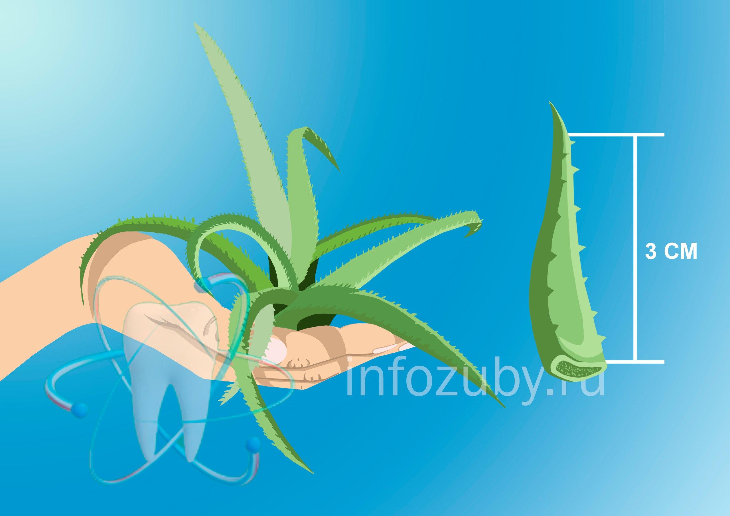 Листья алоэ - народный метод борьбы с заедами