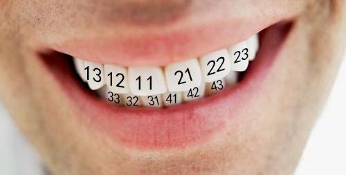 Как считать зубы?