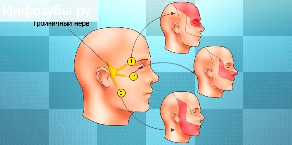 Тройничковый нерв - схема
