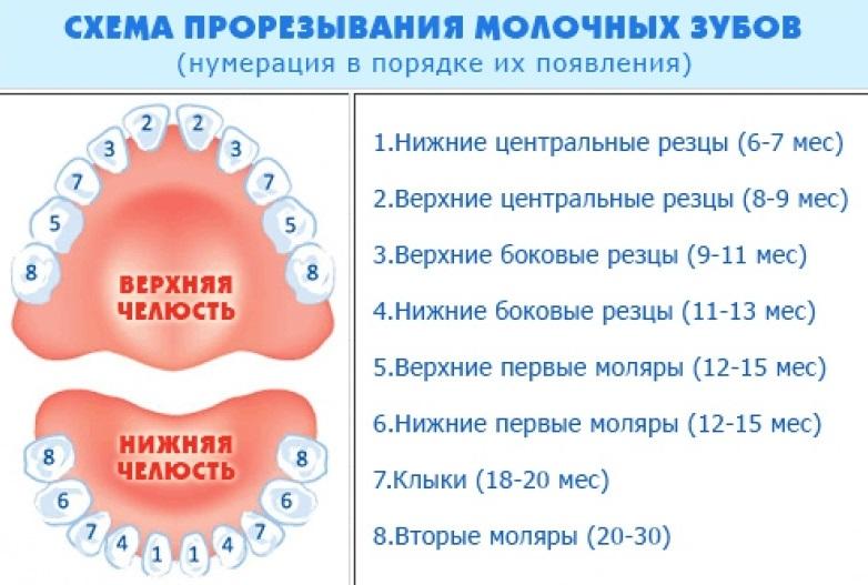 Молочные зубы у детей схема прорезывания температура