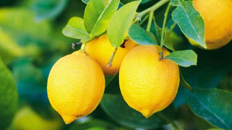 Сода лимон перекись отбелить зубы
