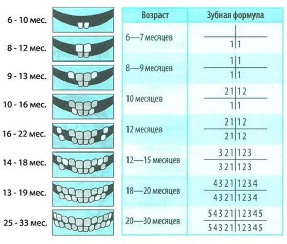 Схема прорезывания зубов у детей по возрасту 62