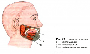 Киста слюнной железы