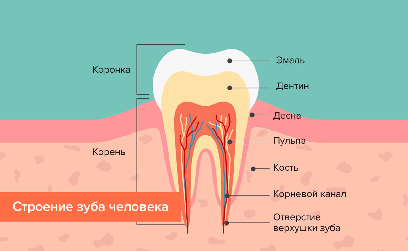 Какие есть методы пломбирования зубных каналов?